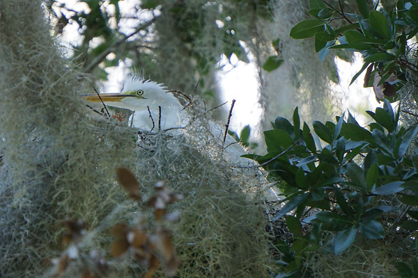 Single chick sitting inside of the nest.