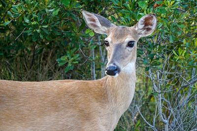 St. Andrews State Park Wildlife