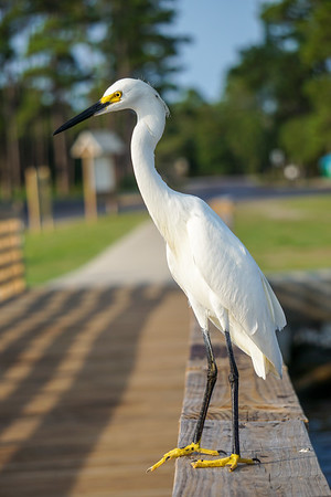 Sunrise with a Snowy Egret