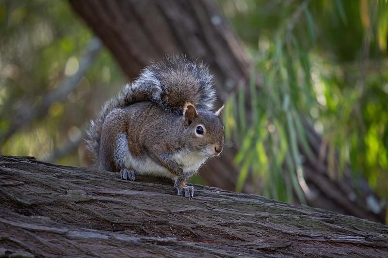 Super Squirrel
