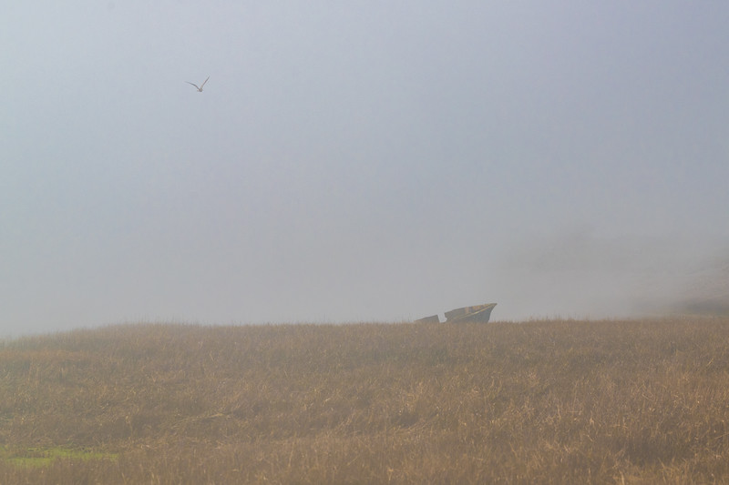 Seagull and shipwreck, although its more of a broken boat than a shipwreck