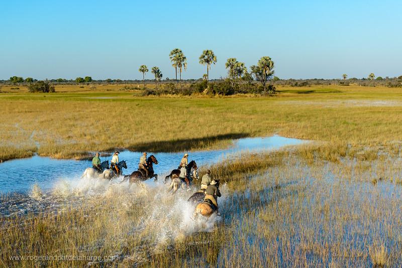 Horseback riding safari with African Horseback Safaris. Okavango Delta. Botswana