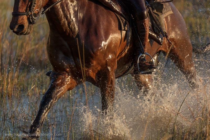 Horseback riding (horse riding). Macatoo Camp. African Horseback Safaris. Okavango Delta. Botswana