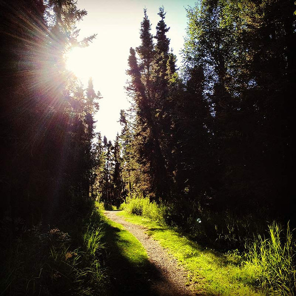 A walk through the woods in Anchorage, Alaska