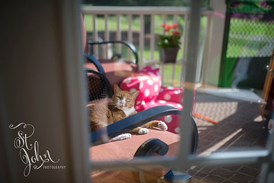 Allie chilling on the porch