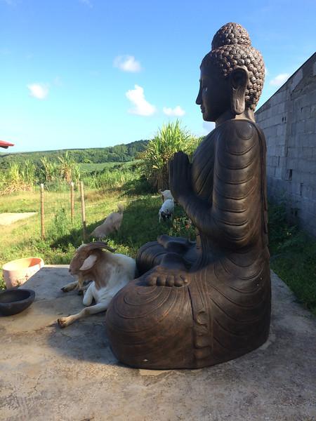 Un cabri et Bouddha