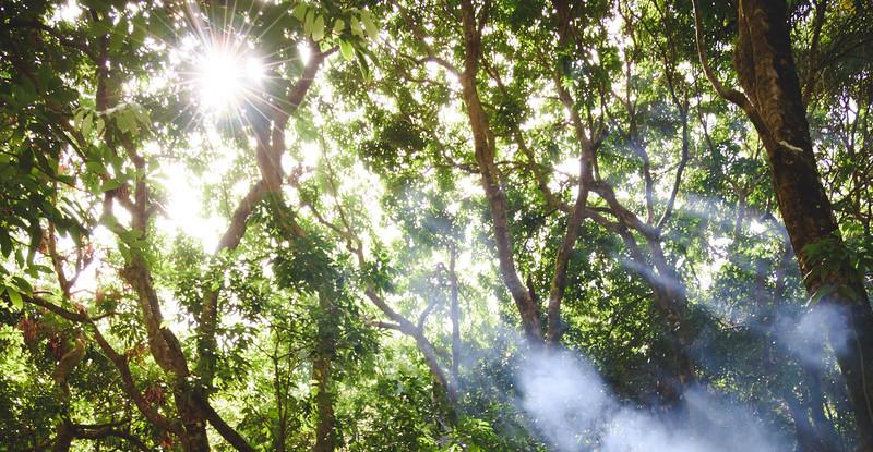 Soleil dans une forêt à Sainte-Suzanne