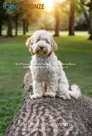 Pet Photography Yate