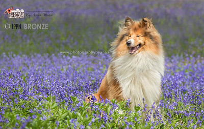 Pet Photography Award