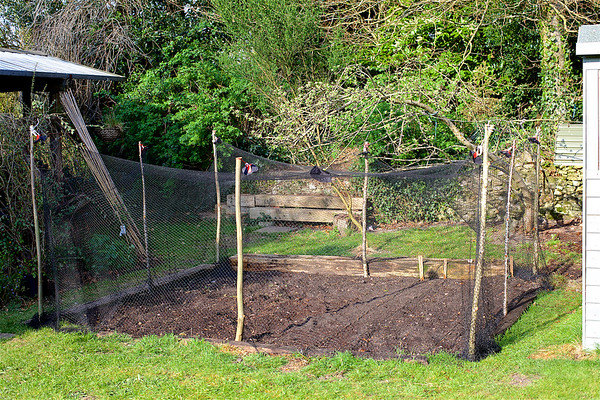 Vegetable Patch, anti bird netting