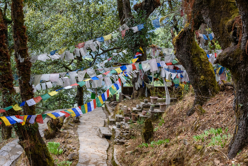Prayer flags on the hike to Tango Gompa