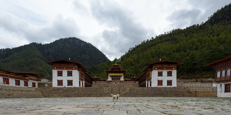 Lots of Dogs in Bhutan