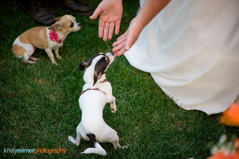 CalgaryWeddingPhotos1797