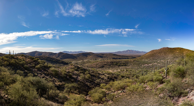 Saguaro cacti outside of Colossal Cave near Vail, AZ. 35 photo panorama