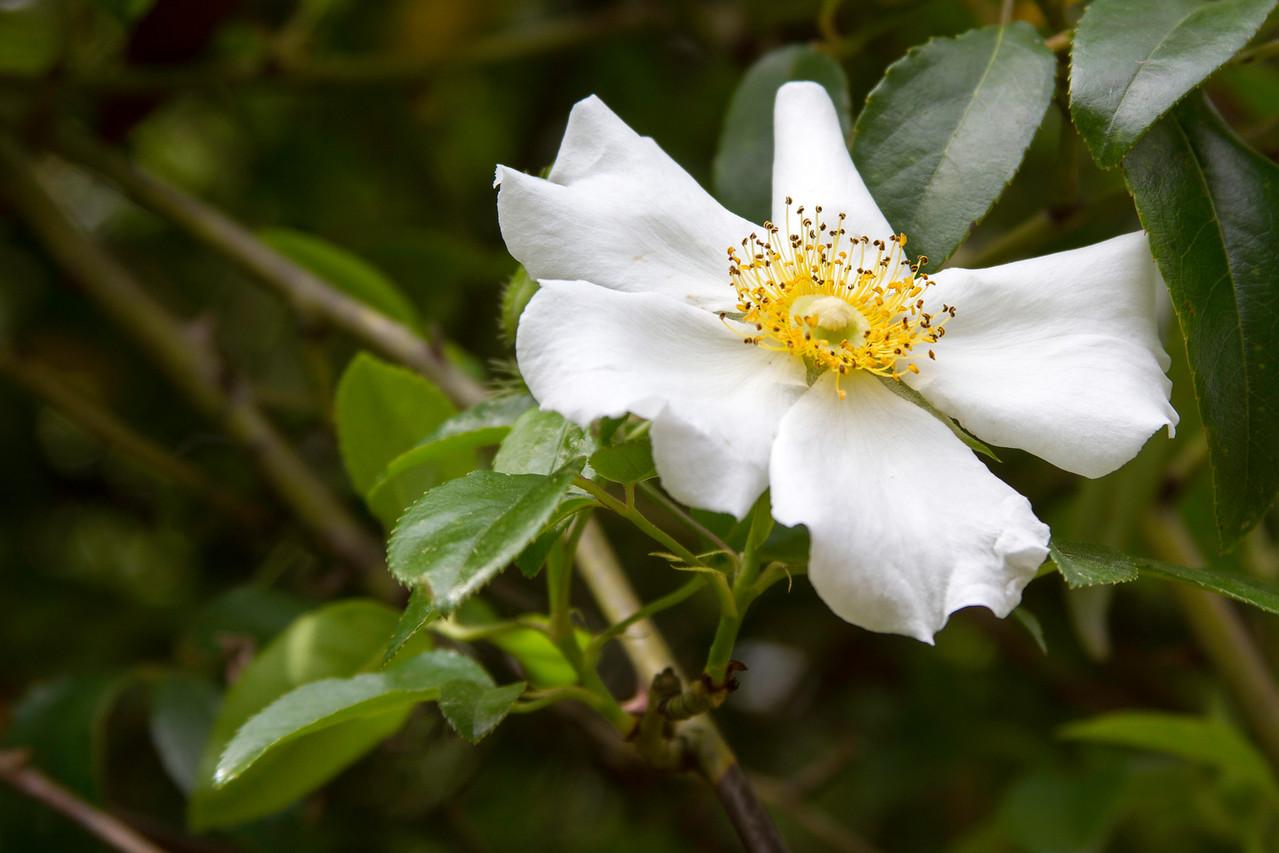 Blooming tree at Armand Bayou Nature Center