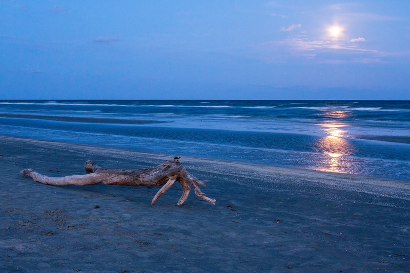 Driftwood with a rising full Moon over the Gulf of Mexico at Galveston Island State Park