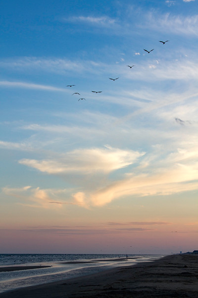 Pelicans flying over the beach at sunset at Galveston Island State Park