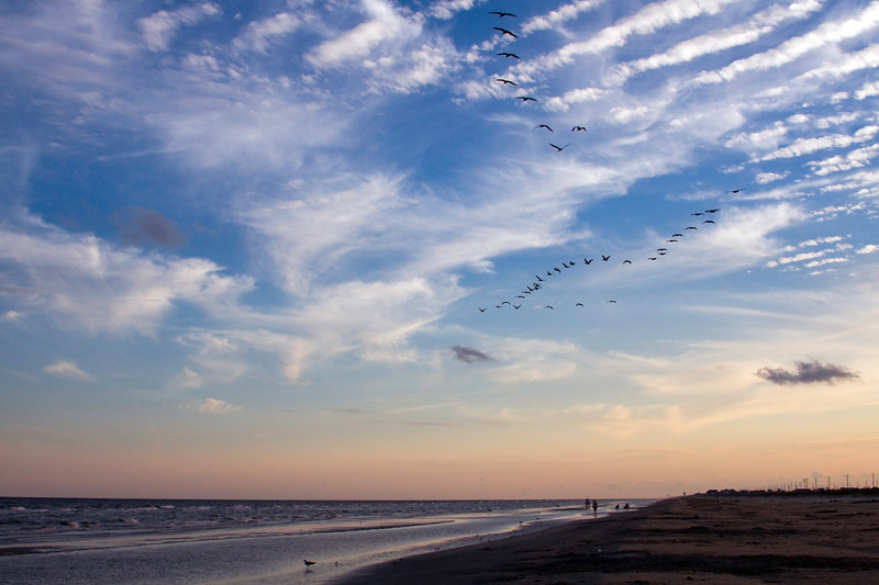 Pelicans flying over Galveston Island State Park at sunset