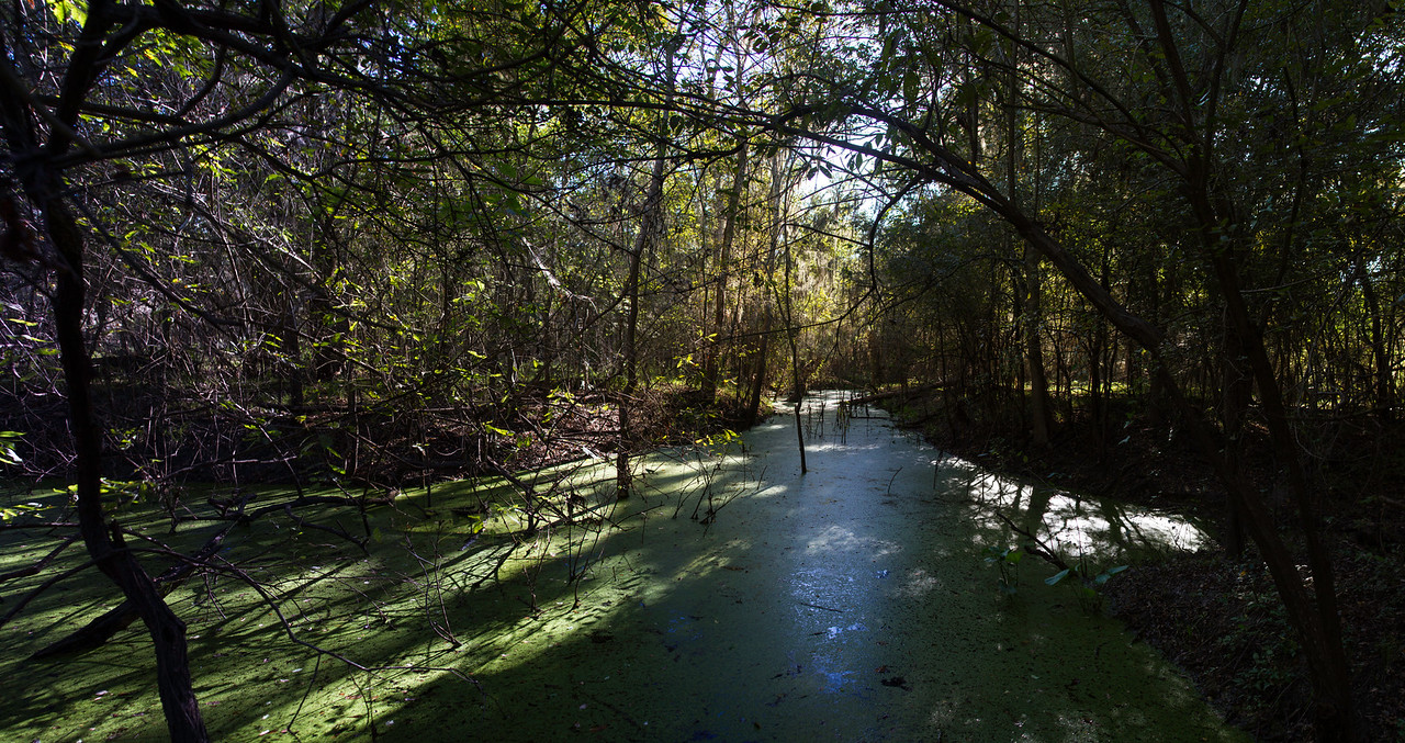Swampy creek in Brazos Bend State Park. 18 photo panorama