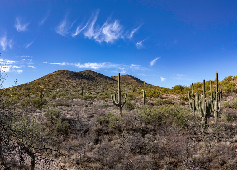 Saguaro cacti outside of Vail, AZ. 6 photo panorama