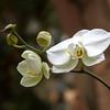 Week 8. Orchid