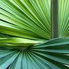 Week 8. Palm leaves