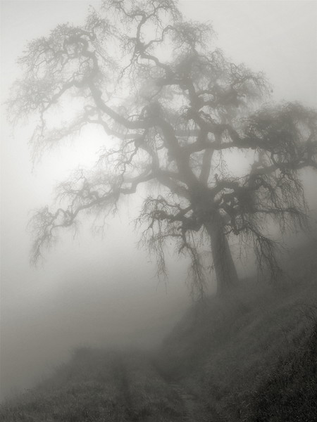 Hunting Hollow Fog Series 4