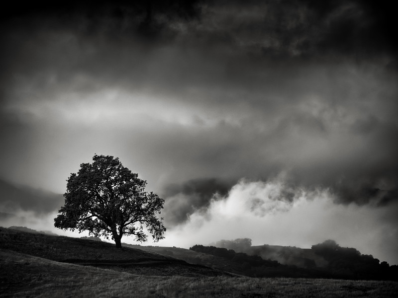 Tree with low Clouds