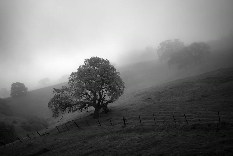 Evergreen Fog 1
