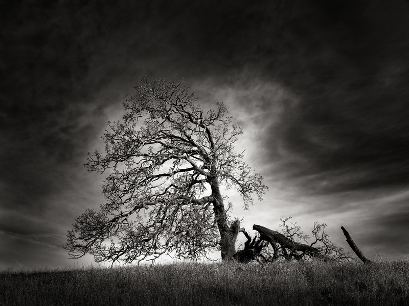 The Hurt Tree
