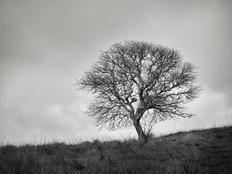 Tree along Los Cerritos Trail