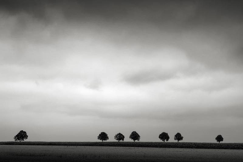 Sieben Bäume