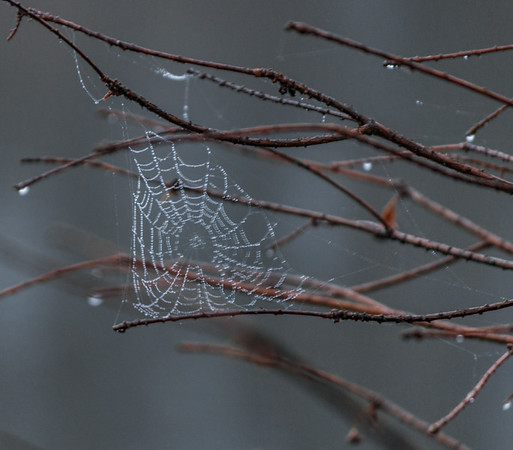 Finally got a shot of a spider's web to work!!!! This was a good days work.