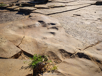 Bradysaurus footprint near Fraserburg. Northern Cape. South Africa.