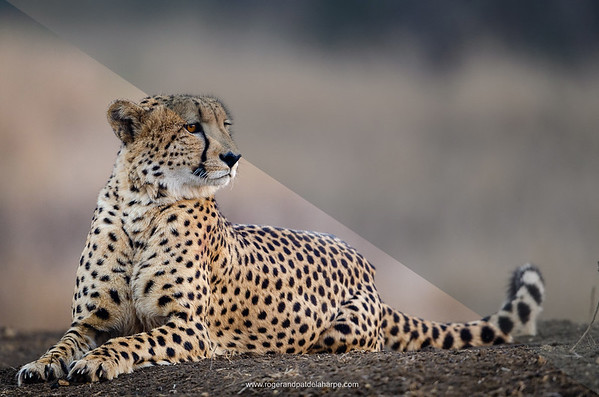 """Our """"African Wildlife"""" Lightroom develop preset is our go to preset for adding punch to an image making for bright, contrasty and vibrant images."""