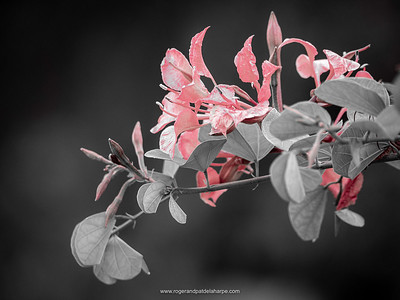 "The ""Ruby Reds"" Lightroom preset does just what it says - highlights the reds in a photograph while turning the rest of the photograph into black and white."