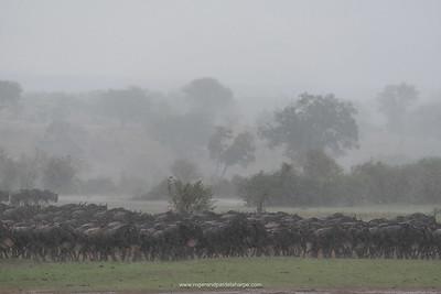 Serengeti National Park. Tanzania