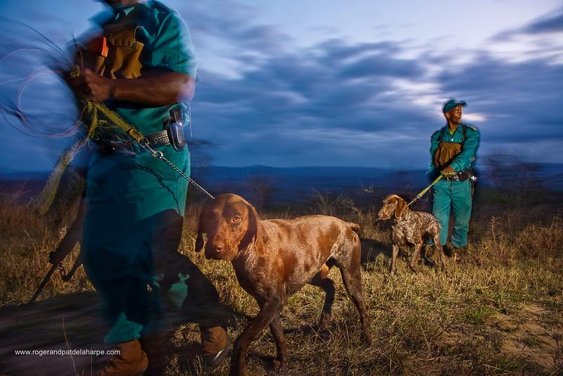 Anti Poaching unit on patrol. Hluhluwe iMfolozi Park. KwaZulu Natal. South Africa