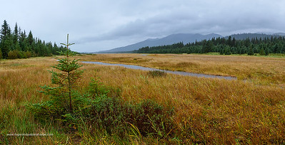 Scenic view. South Central Alaska. United States of America (USA).