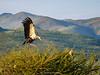 Nkomazi Game Reserve. Mpumalanga. South Africa