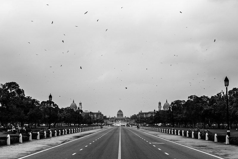 "The birds were out this morning...I've never seen this scene here before. TIP: if you are walking along this road and don't want to get harassed by every passing rickshaw driver, walk on the grass along the side of the opposing traffic....far enough away from the road that the drivers will have to think twice before shouting the usual stuff...""hello sir, auto? 10 rupees India Gate sir, Where are you from?"" Some eager guys might pull over, park, and walk over to you and try to persuade you to go shopping at the government emporium or some other special bazar that is happening that day. There was a driver standing behind me when I took this photo. He said he was a famous rickshaw driver. Through trial and error, I've found that telling them that I have a driver and pointing somewhere ahead of me gets them off my case quickly...they don't seem to care where I am from them. HINDI LESSON: ""Mere paas driver hai"" - I have a driver (while pointing ahead)."