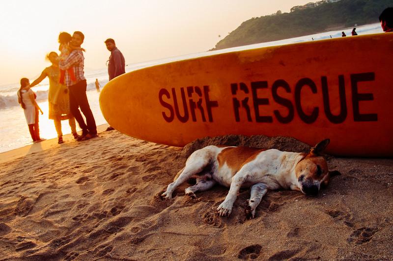A beach dog rests in the shade of a rescue board. Bogmalo Beach, Goa, India. Fuji X-Pro 1, 18mm lens, VSCO Film 04 - Fuji Fortia SP with a few tweaks.