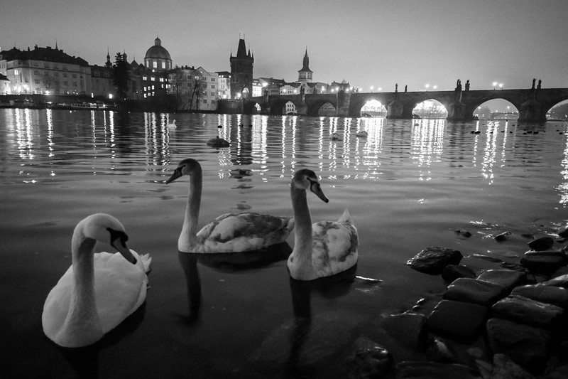 Early morning wintery view of the Charles Bridge, Prague. These geese aren't as shy as they look in this photo!  1/4 sec at f/2.0, ISO 3200, 18mm.