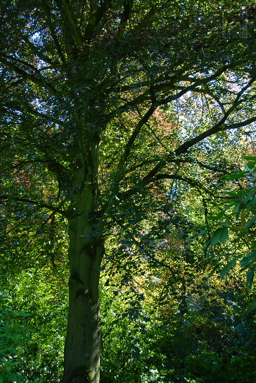 tree outside at stourhead
