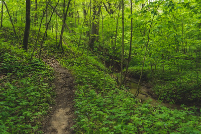 Stream along the South Trail