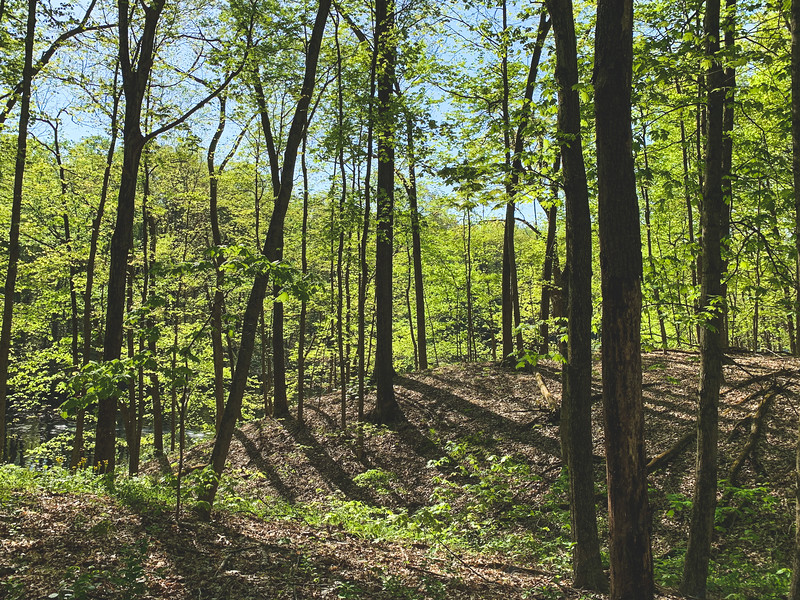 The hillside along Lake Lenape