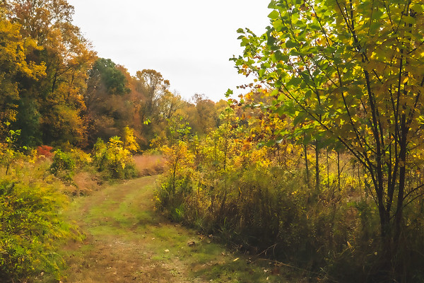 Color along the Trail