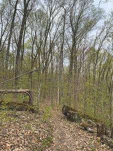 There were alot of downed trees!