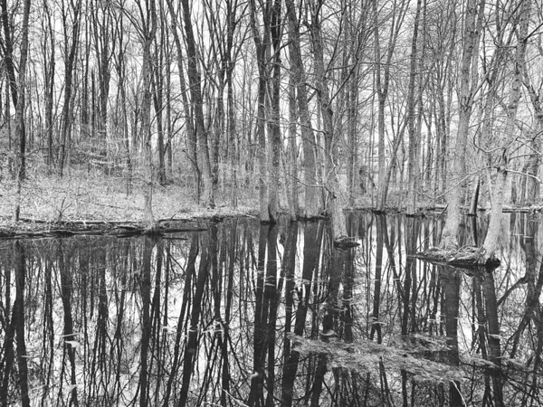 Wetland Area