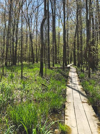 Greenery in the marsh